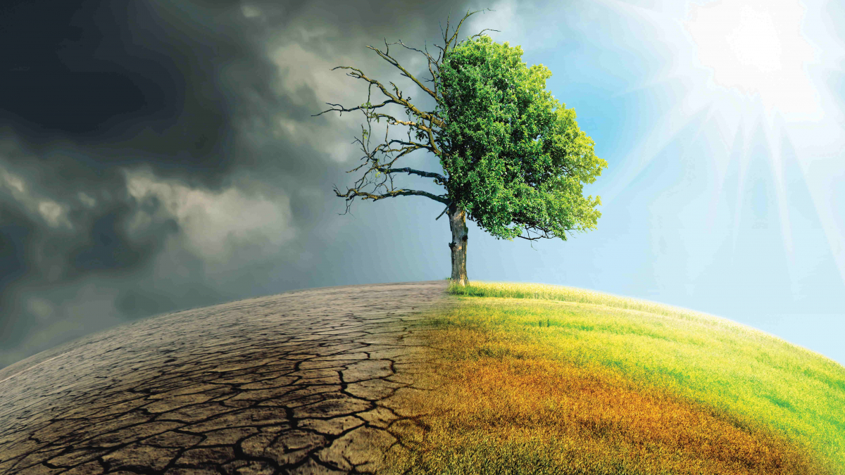 Climate Change represented by a split image of a healthy tree and a dead tree