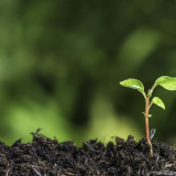 Environment. image of a seedling